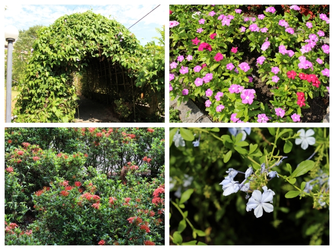7. flores